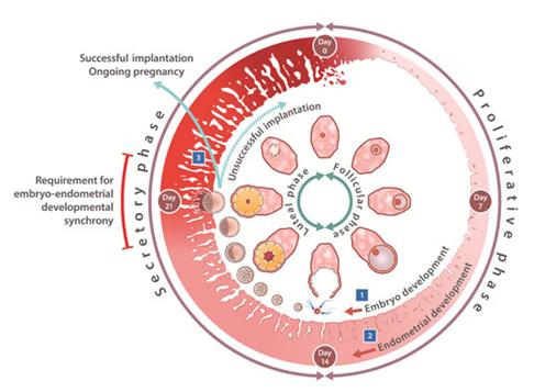 http://www.rawalfertility.com/wp-content/uploads/2019/03/endometrial.jpg